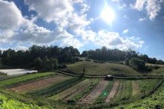 3_Olivette-Farm
