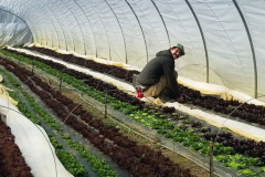 High Tunnels at the Farm
