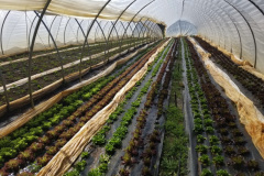 Crops in the High Tunnels