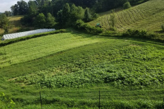 Cover Crops